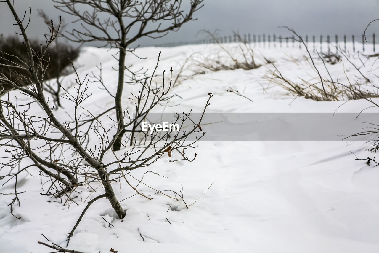 Dead Plants On Snow Covered Field