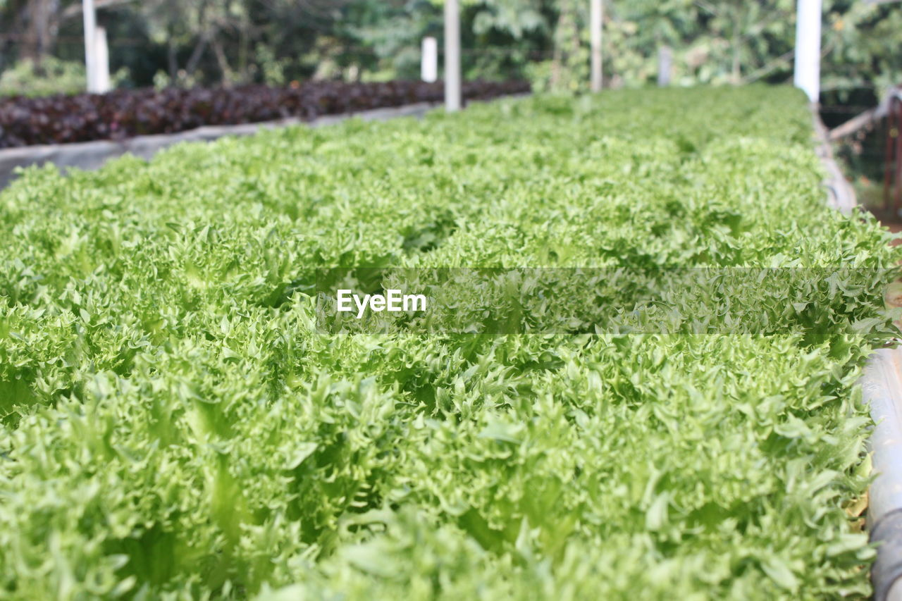 green color, grass, no people, growth, nature, day, leaf, outdoors, freshness, close-up