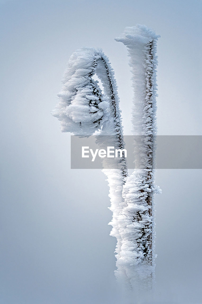 cold temperature, winter, snow, frozen, nature, white color, ice, no people, day, beauty in nature, sky, covering, tranquility, copy space, clear sky, outdoors, low angle view, scenics - nature, deep snow, icicle, powder snow