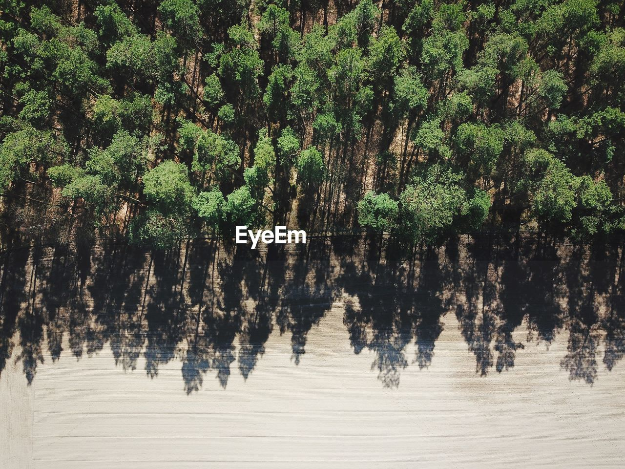 Aerial View Of Trees In Forest During Sunny Day