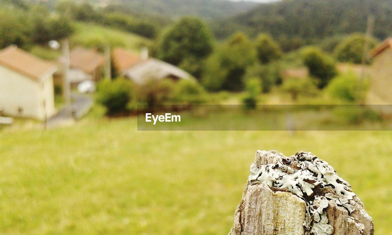 Lichens growing tree stump