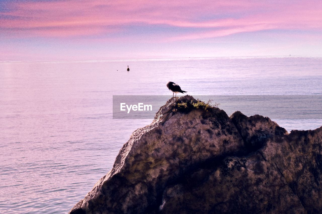 Bird perching on rock against sea during sunset