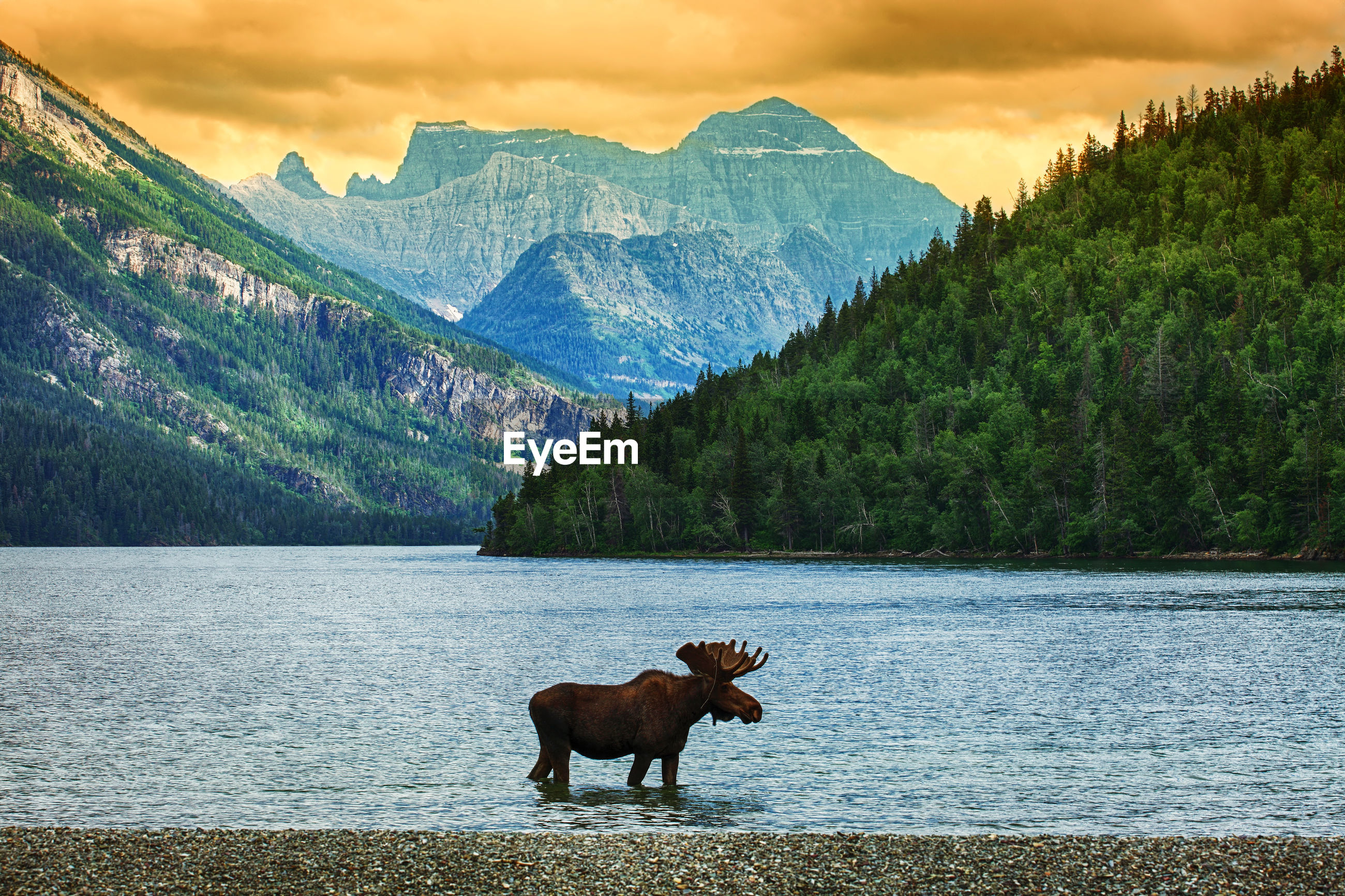 HORSE STANDING ON A LAKE