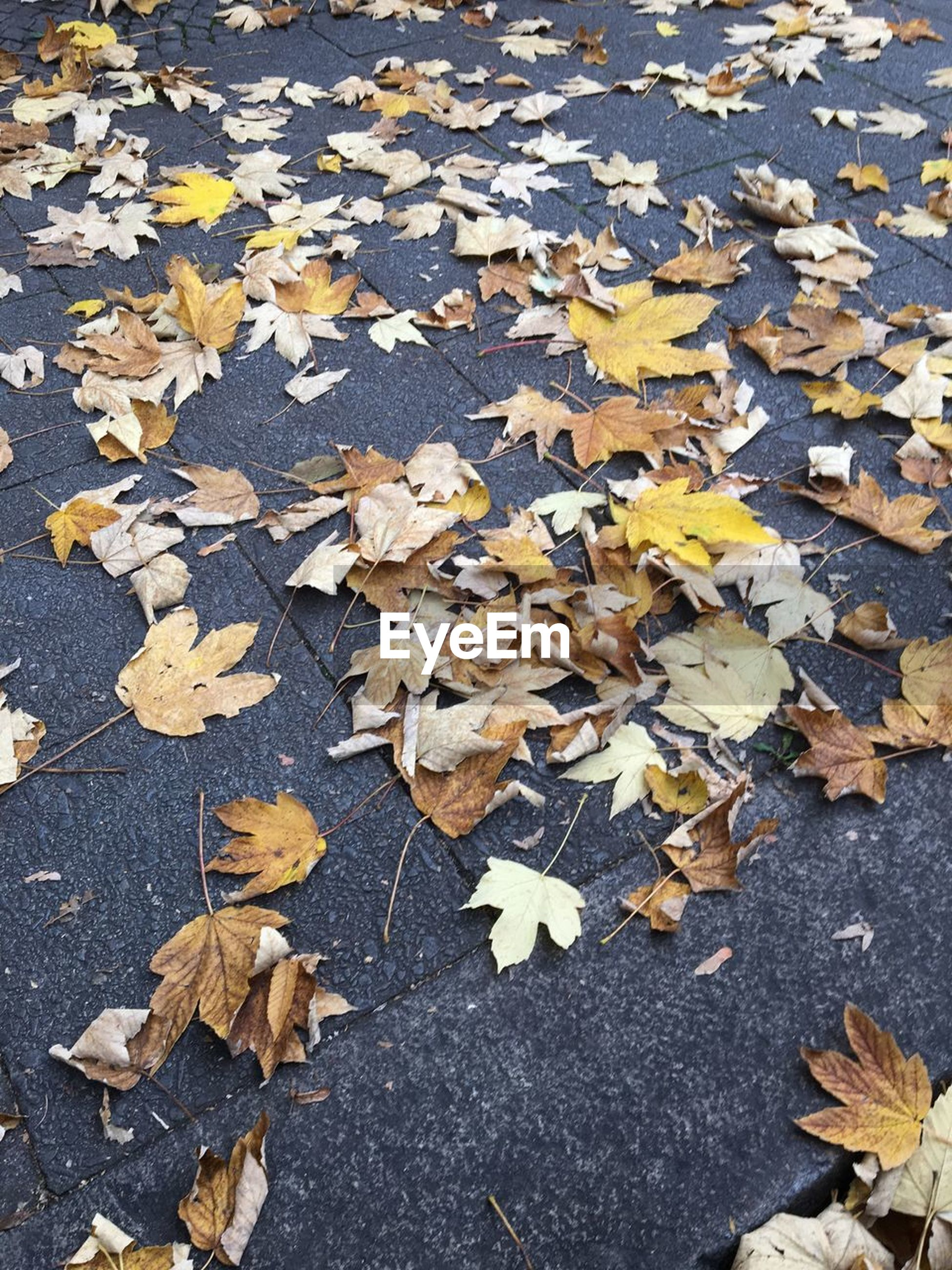 leaf, plant part, autumn, change, leaves, dry, falling, high angle view, maple leaf, nature, day, no people, close-up, outdoors, street, vulnerability, beauty in nature, yellow, natural condition, fragility, messy, fall, autumn collection