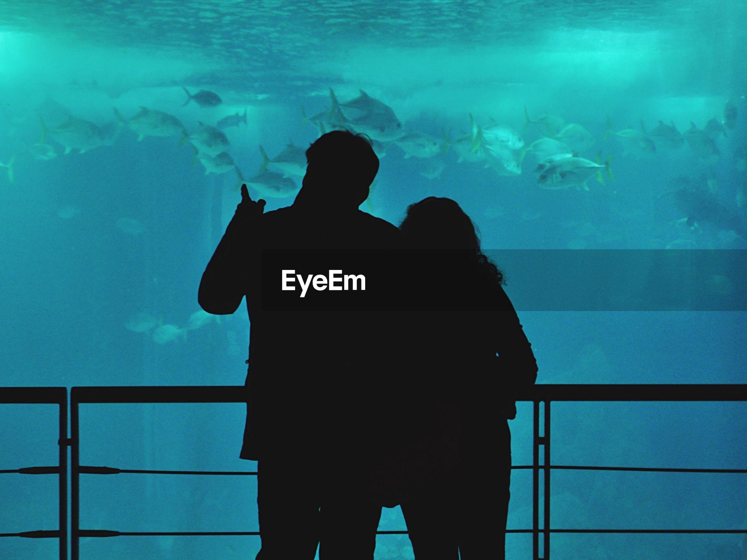 Rear view of silhouette friends at aquarium