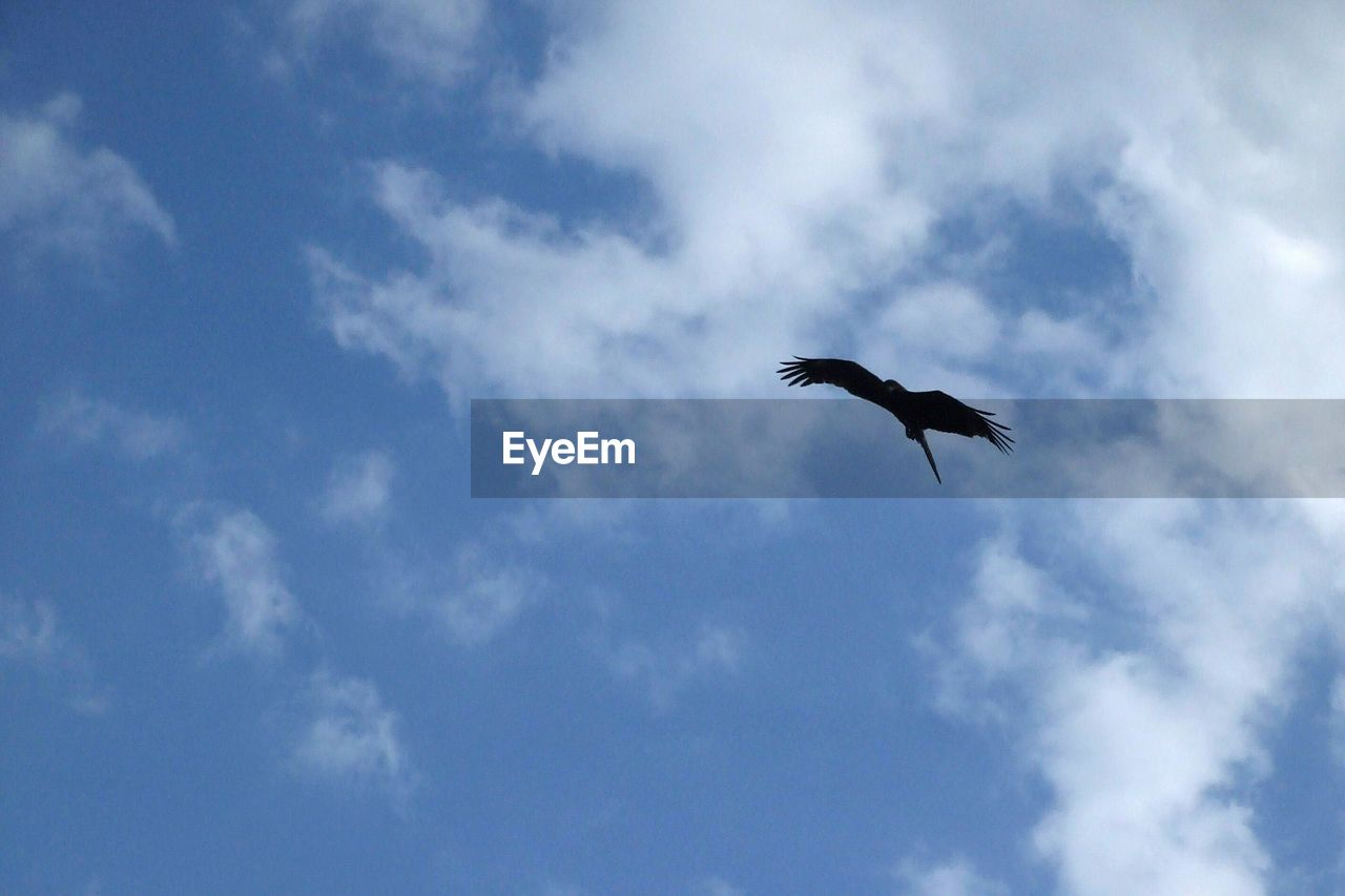 cloud - sky, sky, low angle view, animals in the wild, animal themes, vertebrate, animal wildlife, animal, bird, one animal, flying, no people, beauty in nature, spread wings, day, blue, nature, outdoors, mid-air, motion, height