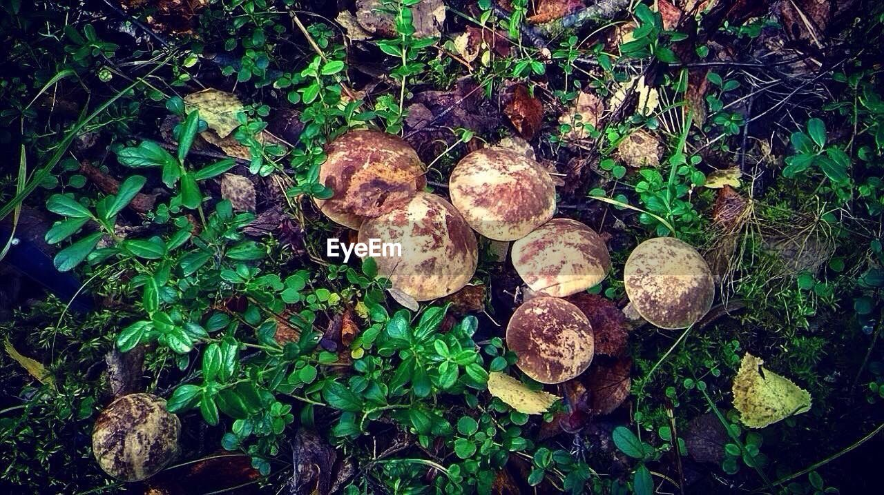 growth, nature, mushroom, no people, plant, outdoors, fungus, leaf, day, toadstool, freshness, beauty in nature, close-up, fly agaric