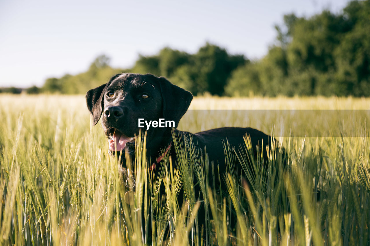 Dog looking away amidst plants on field