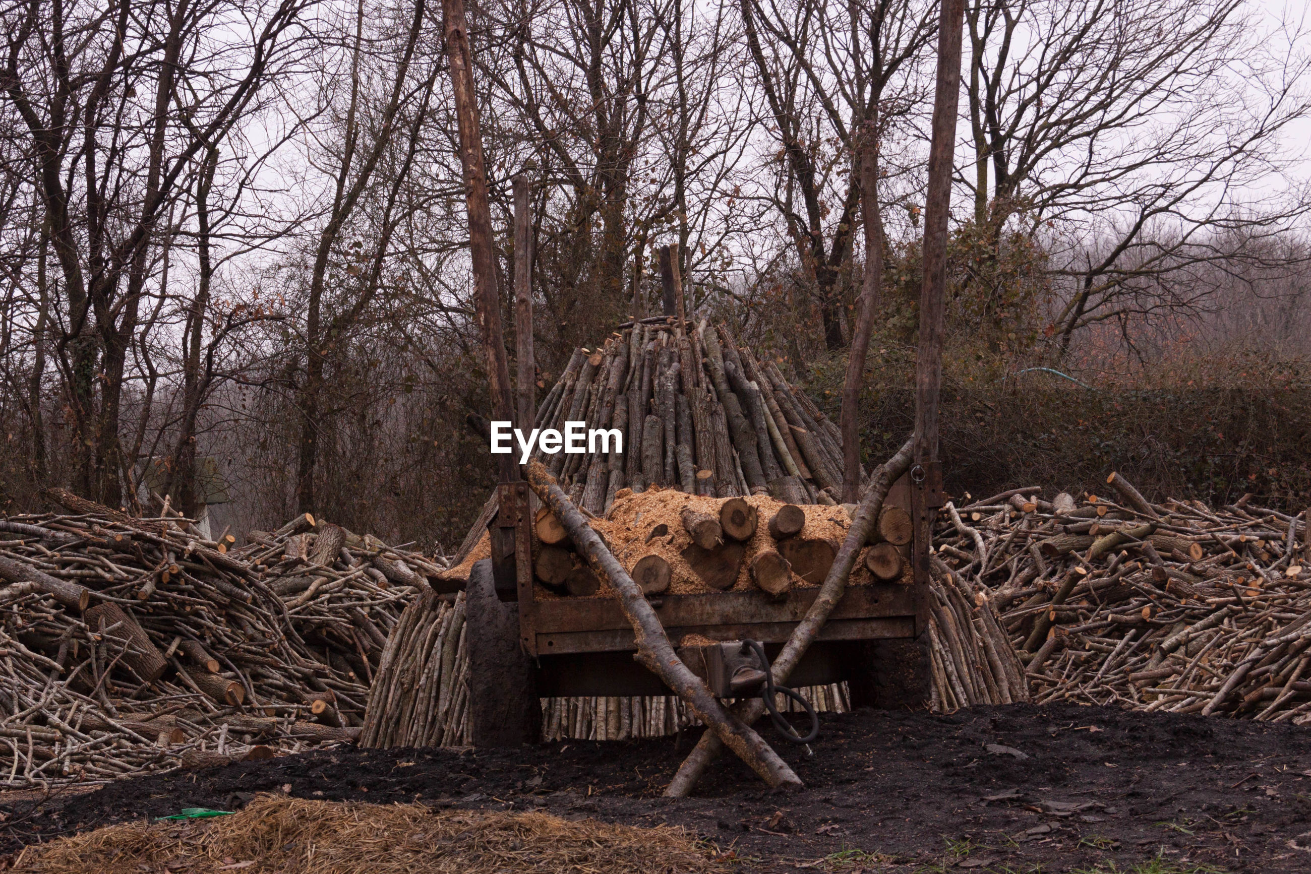 Firewood on cart against bare trees at forest