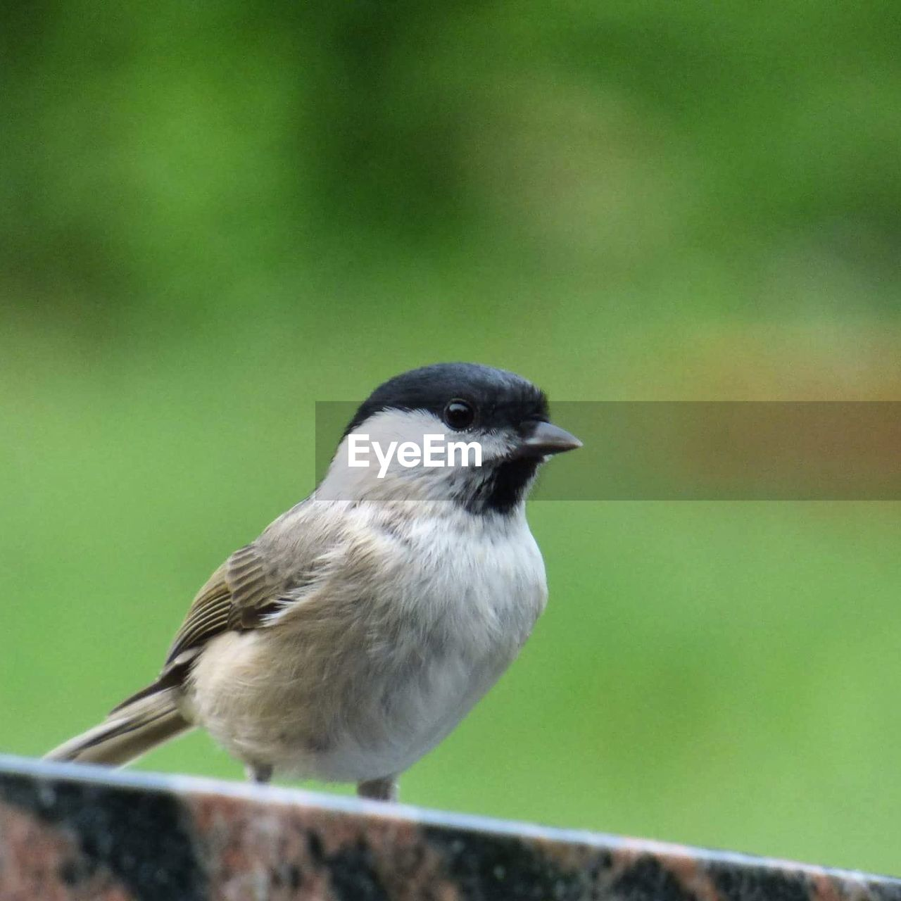 one animal, animal themes, animals in the wild, bird, animal wildlife, no people, day, focus on foreground, close-up, perching, nature, outdoors
