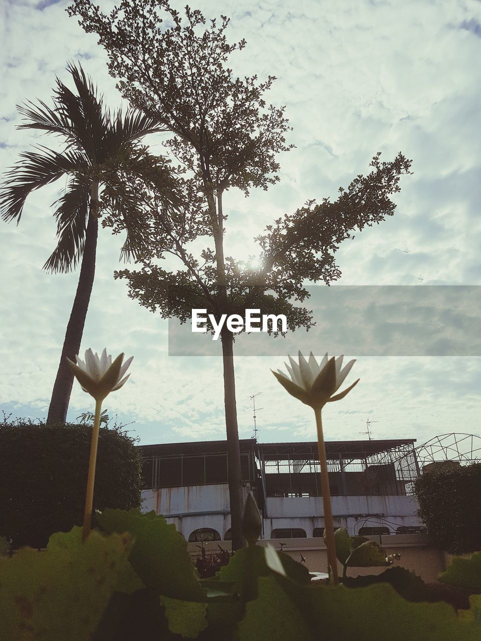 plant, tree, sky, nature, cloud - sky, growth, tropical climate, water, beauty in nature, palm tree, no people, day, architecture, built structure, outdoors, tranquility, land, building exterior, sea