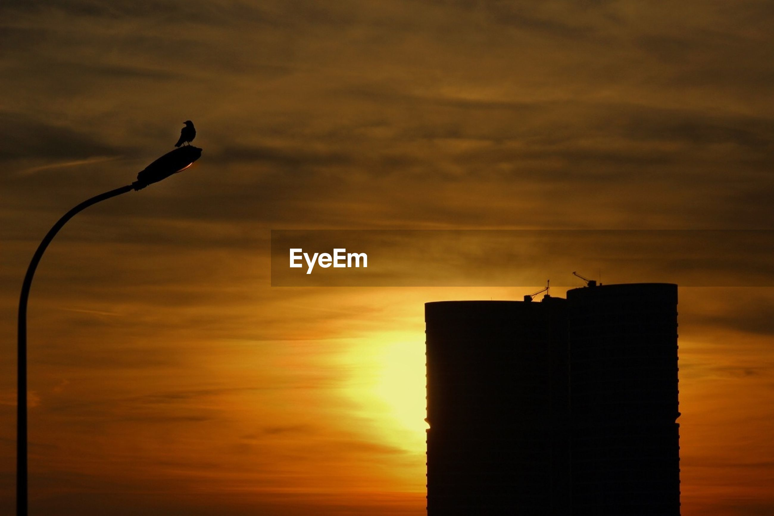 sunset, sky, silhouette, low angle view, bird, orange color, animal themes, one animal, animals in the wild, flying, cloud - sky, wildlife, built structure, building exterior, architecture, cloud, nature, beauty in nature, perching, sun