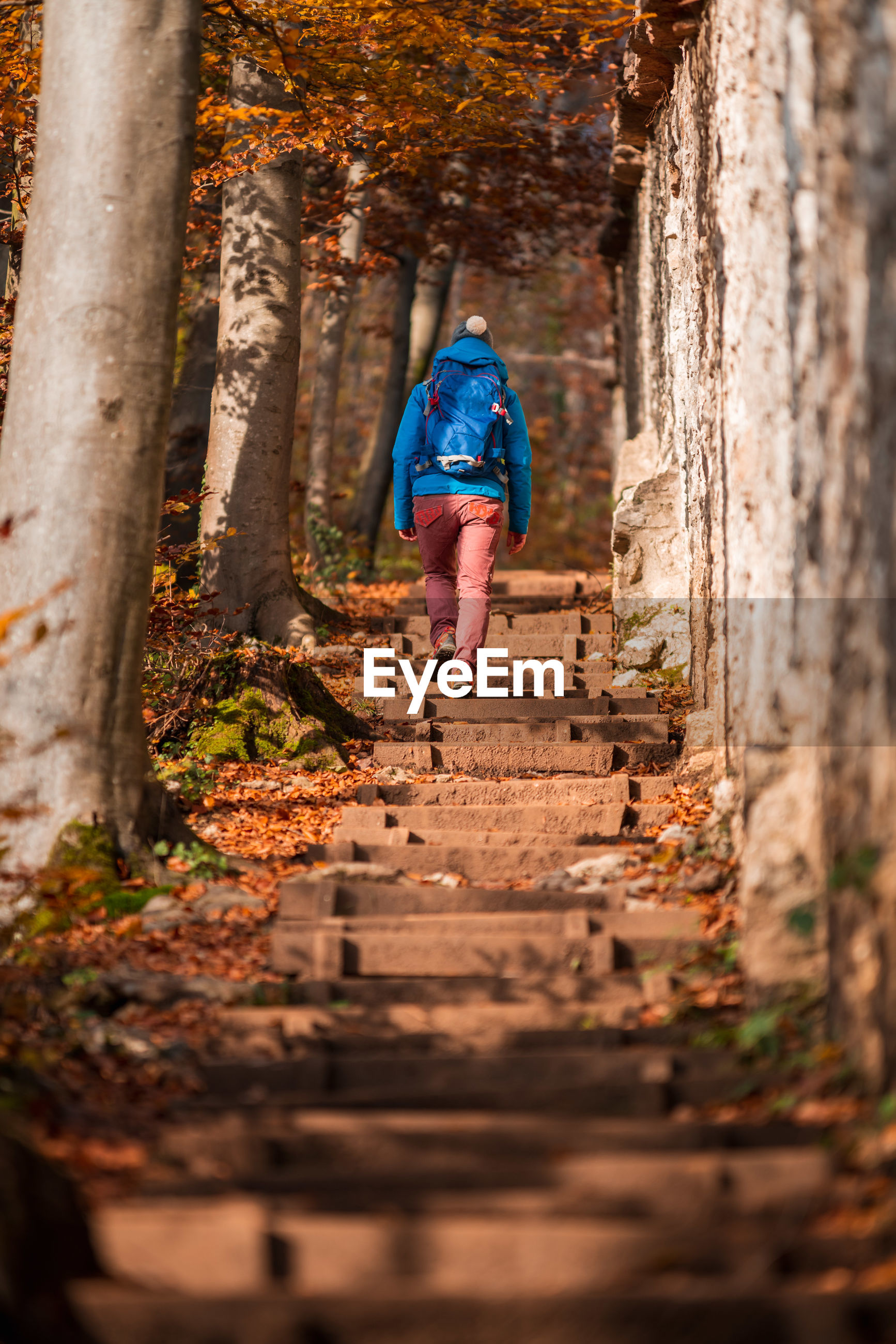 Rear view of backpack woman walking on steps in forest during autumn