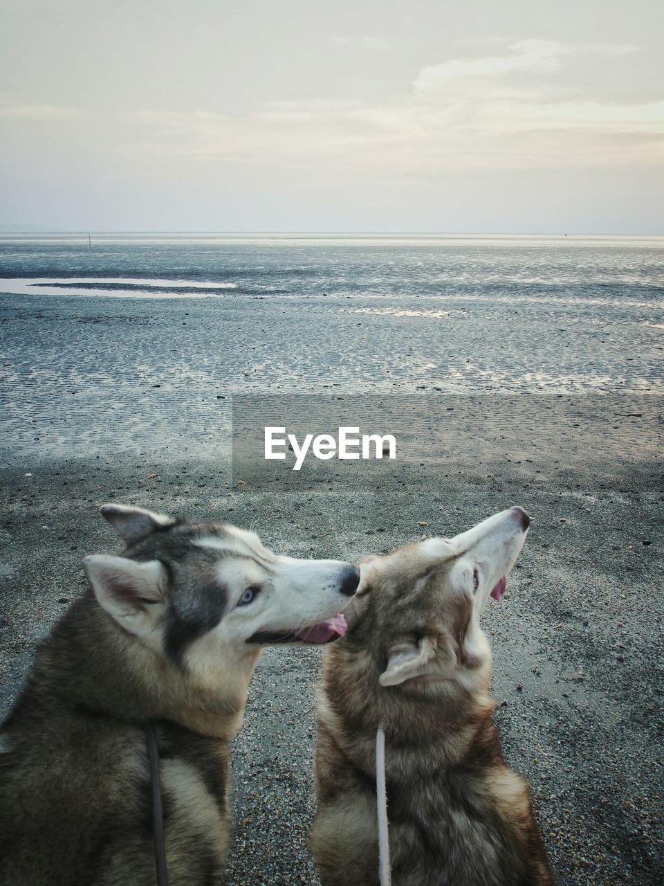 Siberian Huskies At Beach Against Sky