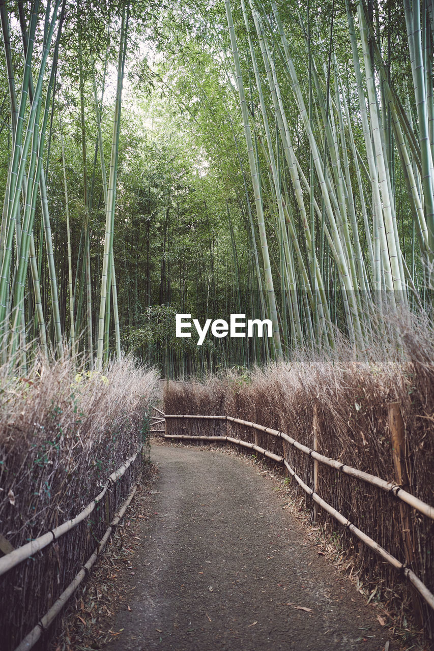 plant, tree, forest, growth, land, the way forward, footpath, direction, nature, tranquility, bamboo grove, beauty in nature, bamboo, green color, bamboo - plant, no people, tranquil scene, day, non-urban scene, lush foliage, outdoors, woodland