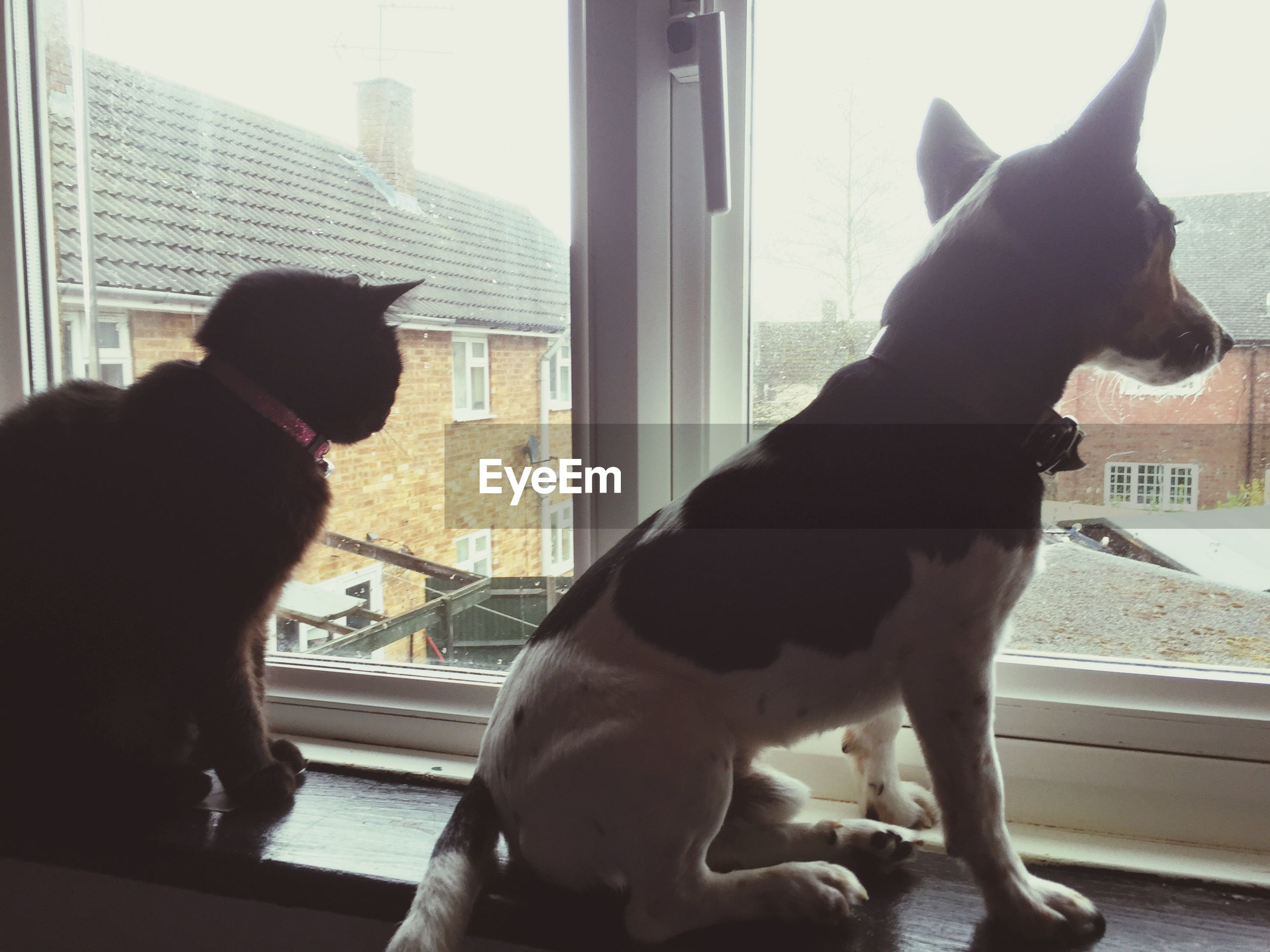 domestic animals, pets, animal themes, one animal, mammal, dog, domestic cat, window, indoors, cat, architecture, one person, building exterior, built structure, glass - material, window sill, pet collar, two animals, looking through window, house