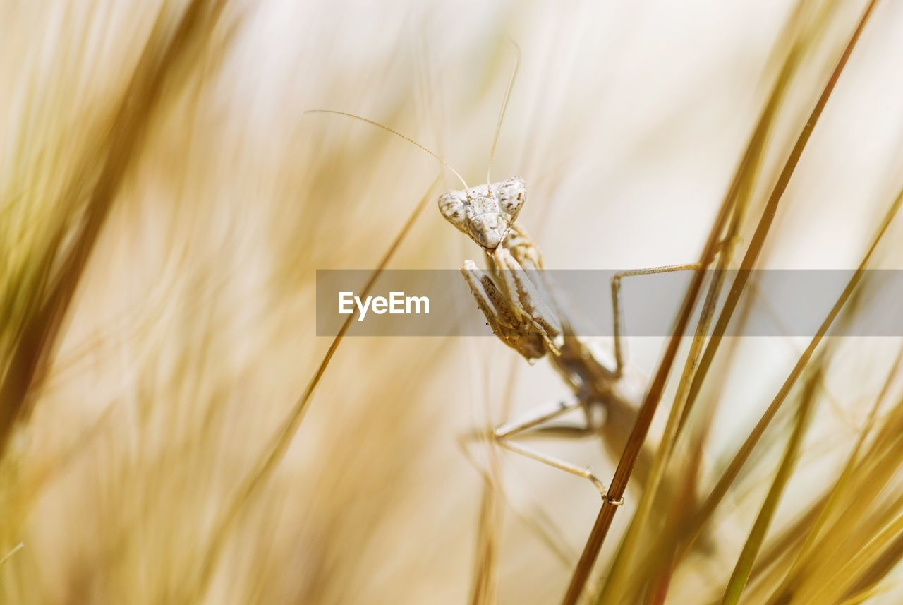 animal, animal themes, one animal, animal wildlife, animals in the wild, invertebrate, close-up, plant, insect, selective focus, crop, cereal plant, no people, nature, day, growth, agriculture, animal body part, wheat, focus on foreground, animal eye, blade of grass
