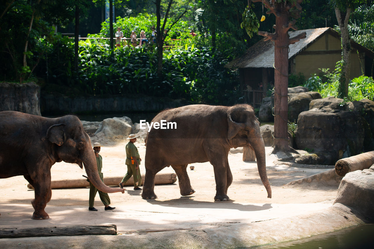 animal, animal themes, mammal, group of animals, vertebrate, nature, day, domestic animals, animal wildlife, sunlight, tree, elephant, plant, animals in the wild, no people, zoo, zoology, two animals, standing, outdoors, herbivorous, animal family, animal trunk