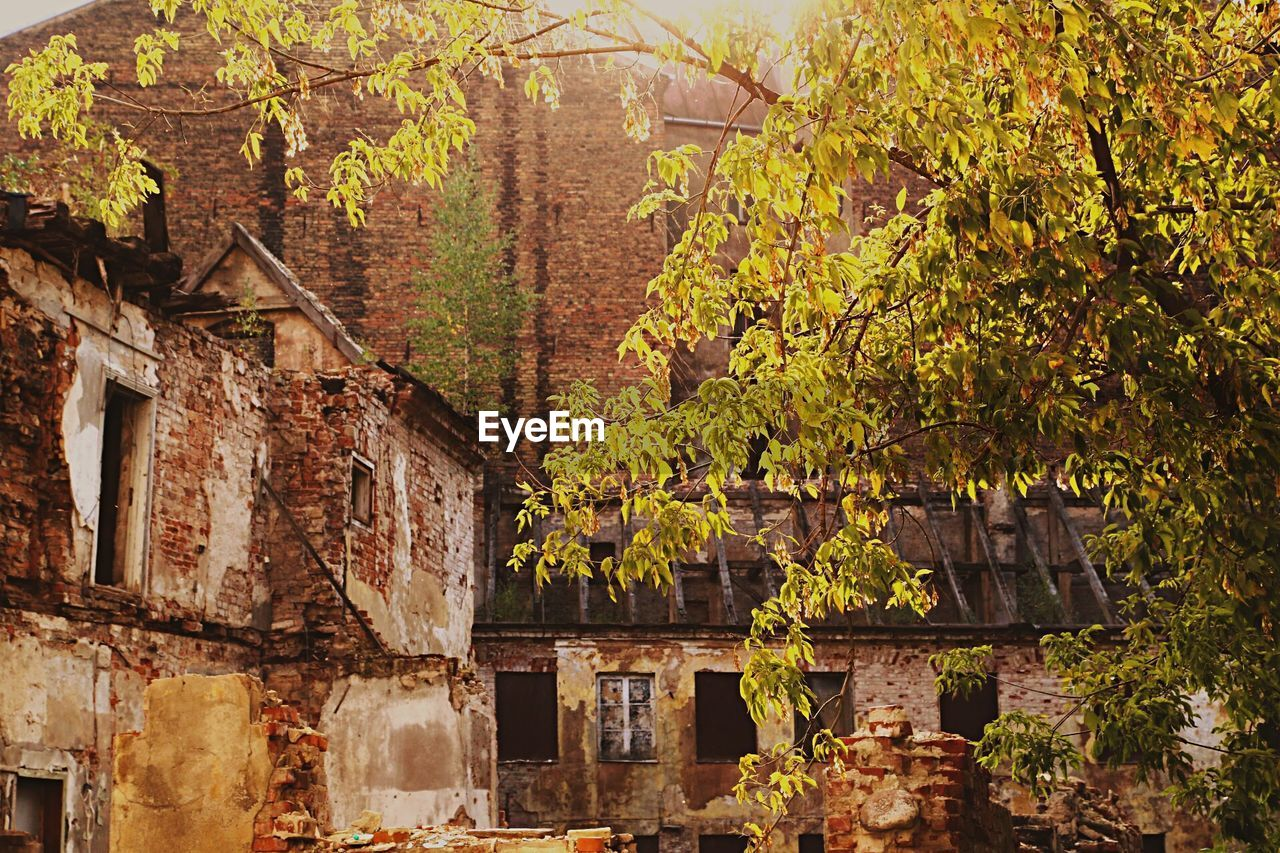 Abandoned Buildings By Trees