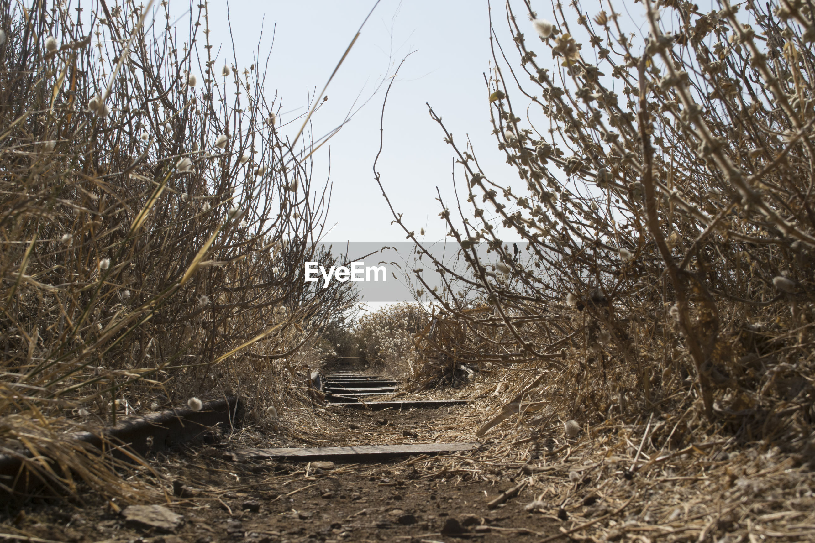 Abandoned railroad track amidst dead plants