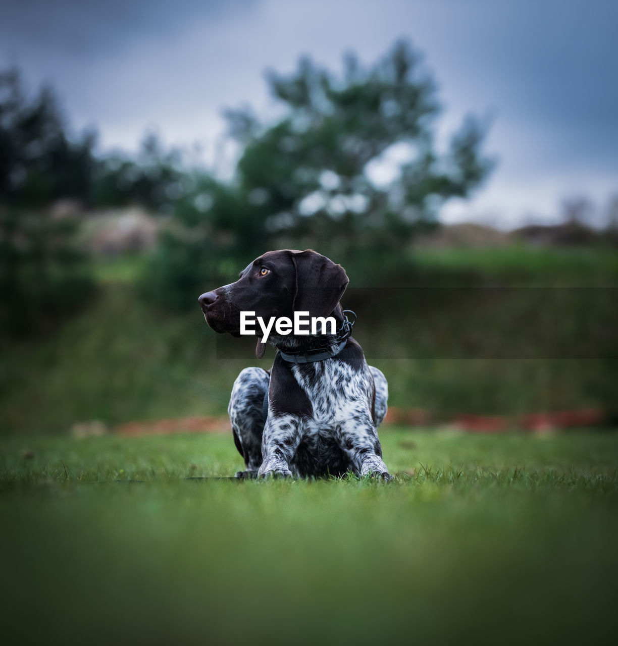 Dog sitting in a field