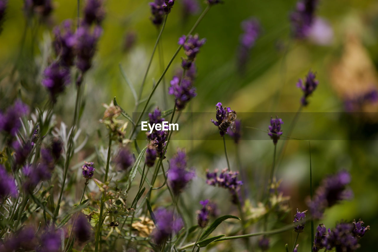 flower, growth, purple, nature, plant, fragility, no people, beauty in nature, outdoors, petal, day, blooming, freshness, close-up, flower head