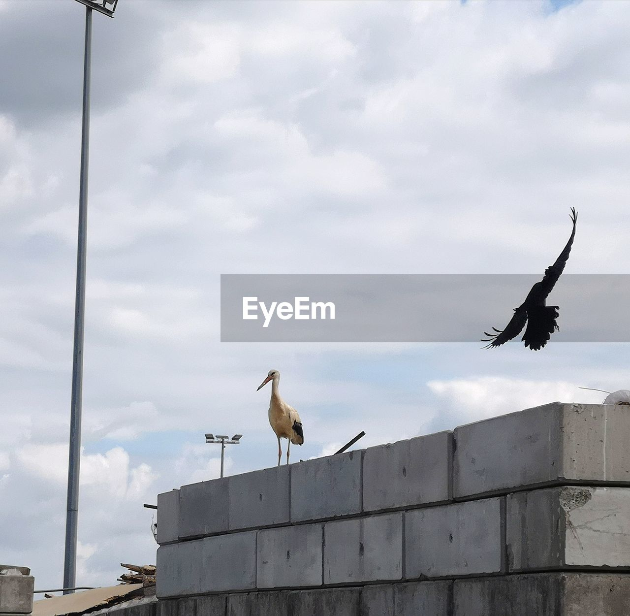 LOW ANGLE VIEW OF SEAGULLS AGAINST SKY