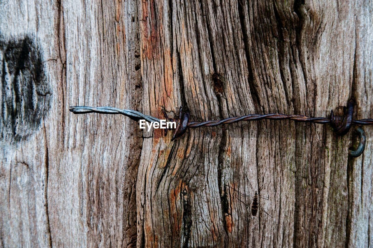 wood - material, textured, close-up, no people, tree, plant, metal, nature, day, wire, outdoors, wood, rough, food and drink, cable, tree trunk, old, trunk, food, fence