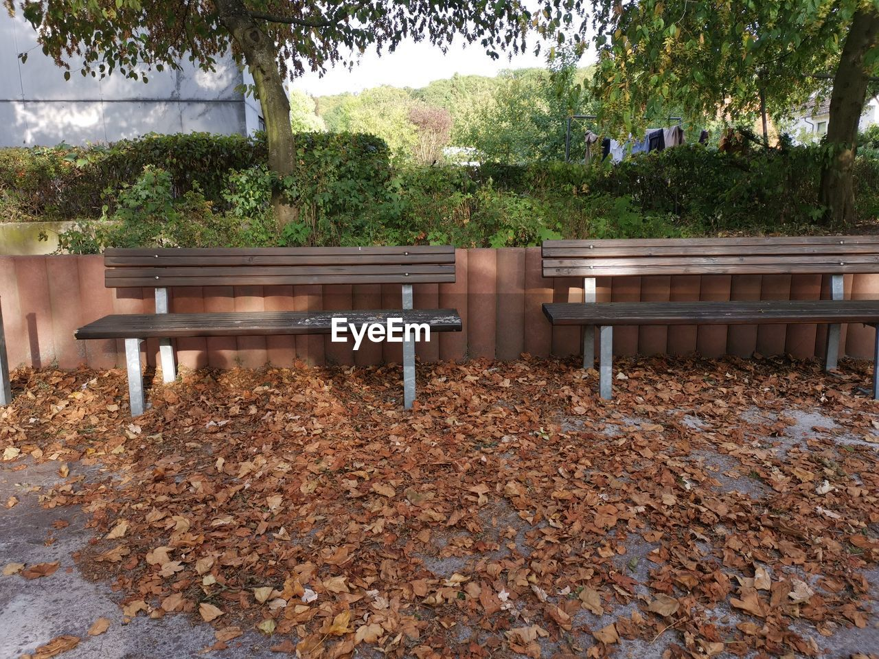 tree, plant, leaf, plant part, nature, bench, seat, change, day, park, autumn, no people, empty, table, outdoors, growth, tranquility, park - man made space, leaves, wood - material, park bench, fall