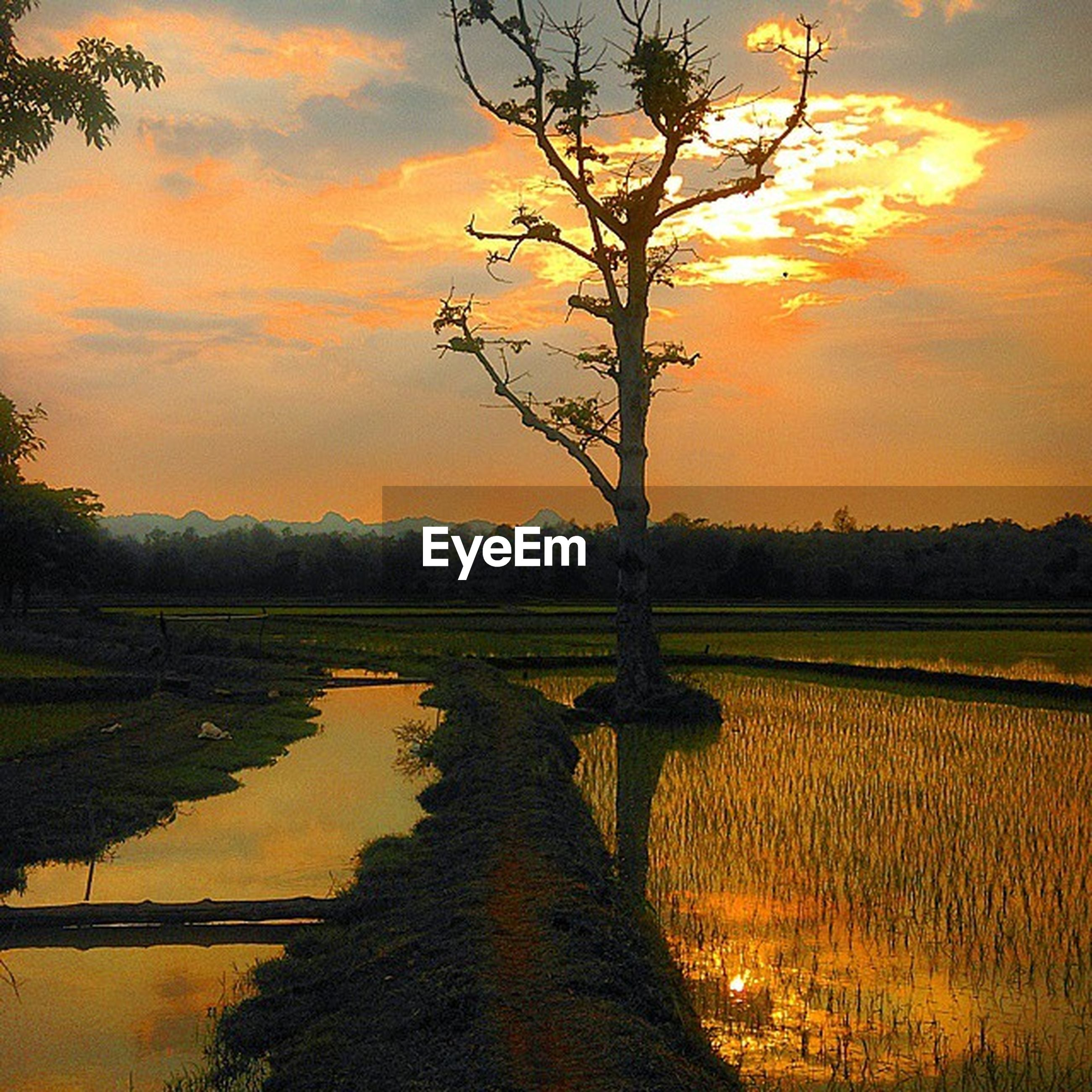 sunset, tranquil scene, tranquility, tree, scenics, sky, beauty in nature, orange color, water, nature, reflection, bare tree, cloud - sky, idyllic, landscape, lake, silhouette, branch, river, sun