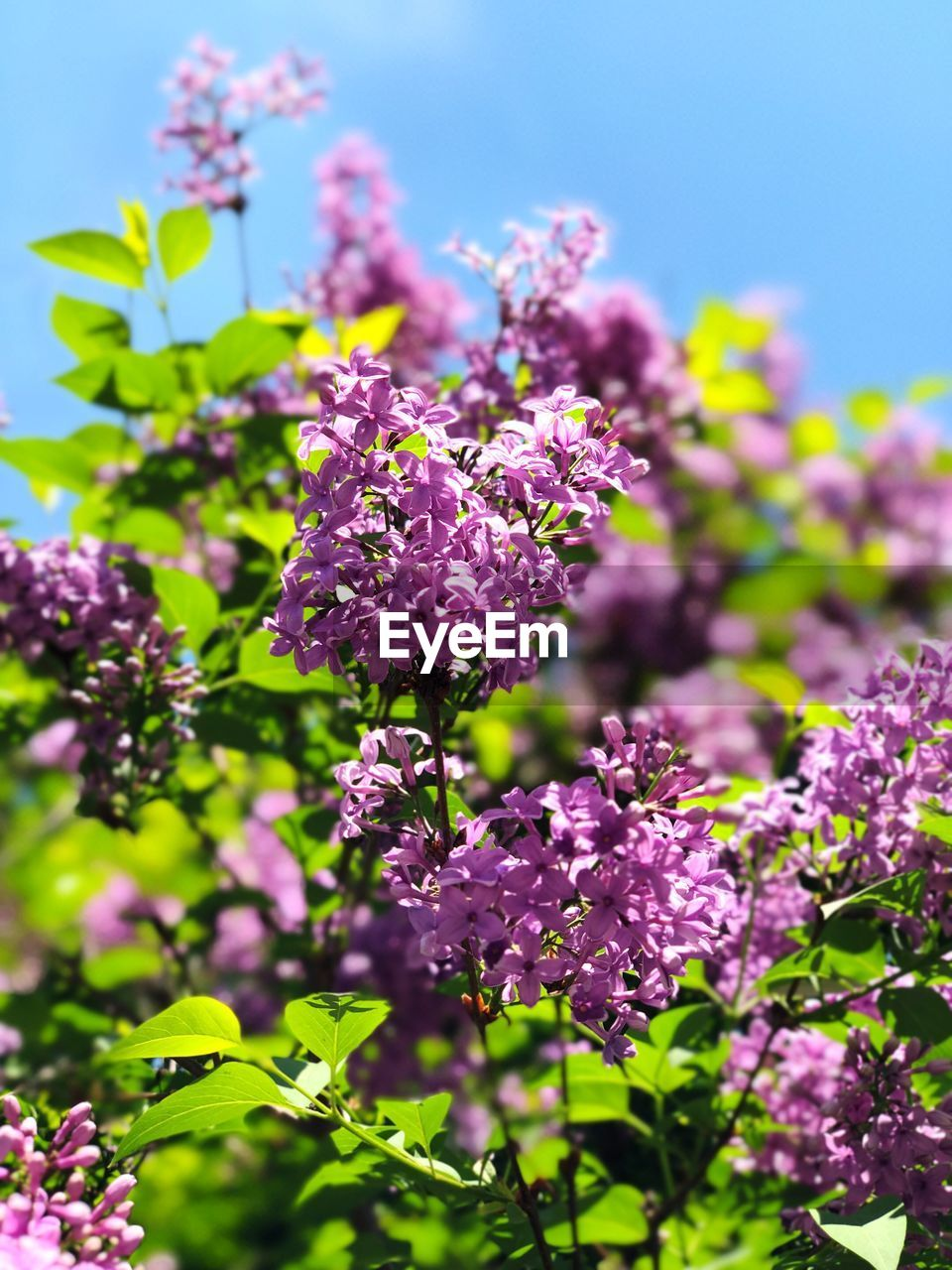 flowering plant, flower, plant, vulnerability, freshness, fragility, growth, beauty in nature, close-up, nature, day, pink color, purple, no people, lilac, selective focus, focus on foreground, sunlight, petal, outdoors, flower head