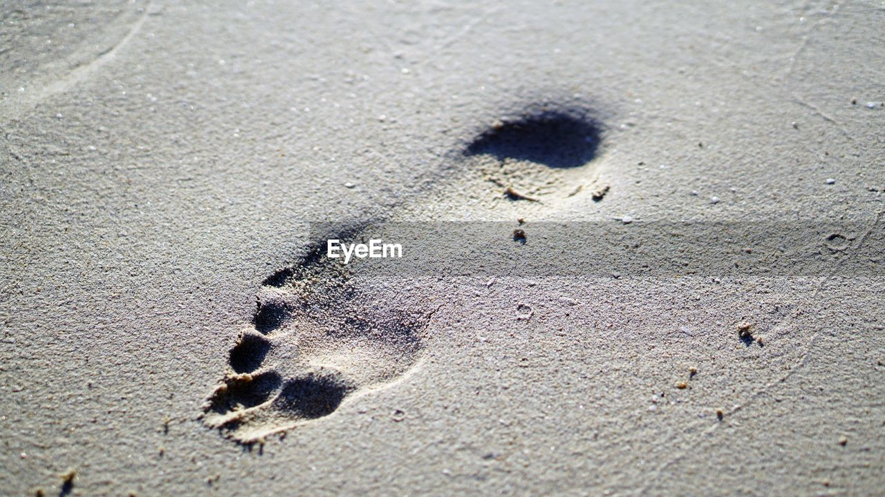 no people, sand, nature, land, high angle view, day, full frame, sunlight, beach, pattern, close-up, footprint, textured, animal, print, animal themes, outdoors, paw print, animal track, backgrounds