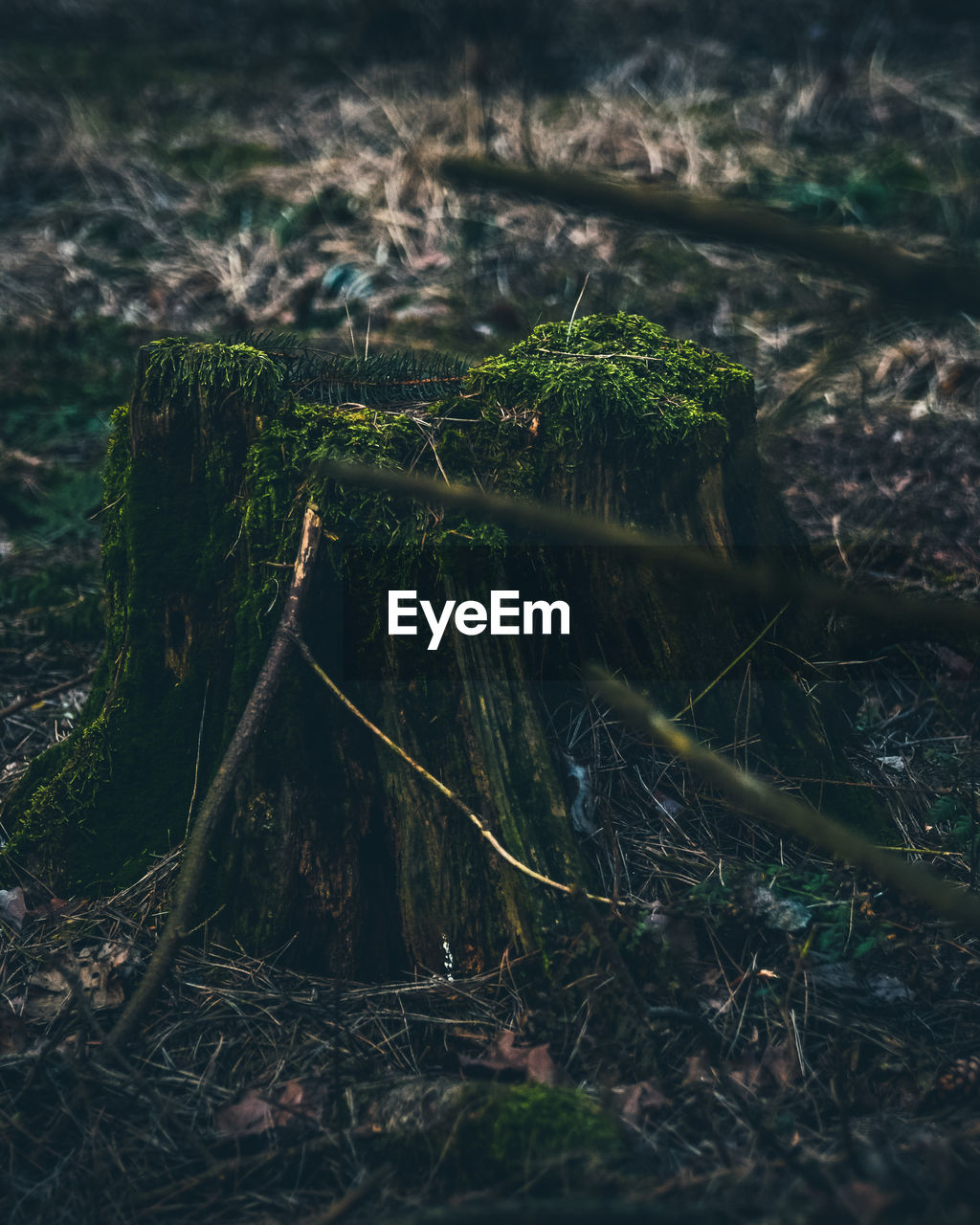 land, plant, nature, selective focus, tranquility, growth, no people, day, forest, tree, moss, field, close-up, beauty in nature, outdoors, green color, plant part, grass, falling, fallen tree, bark