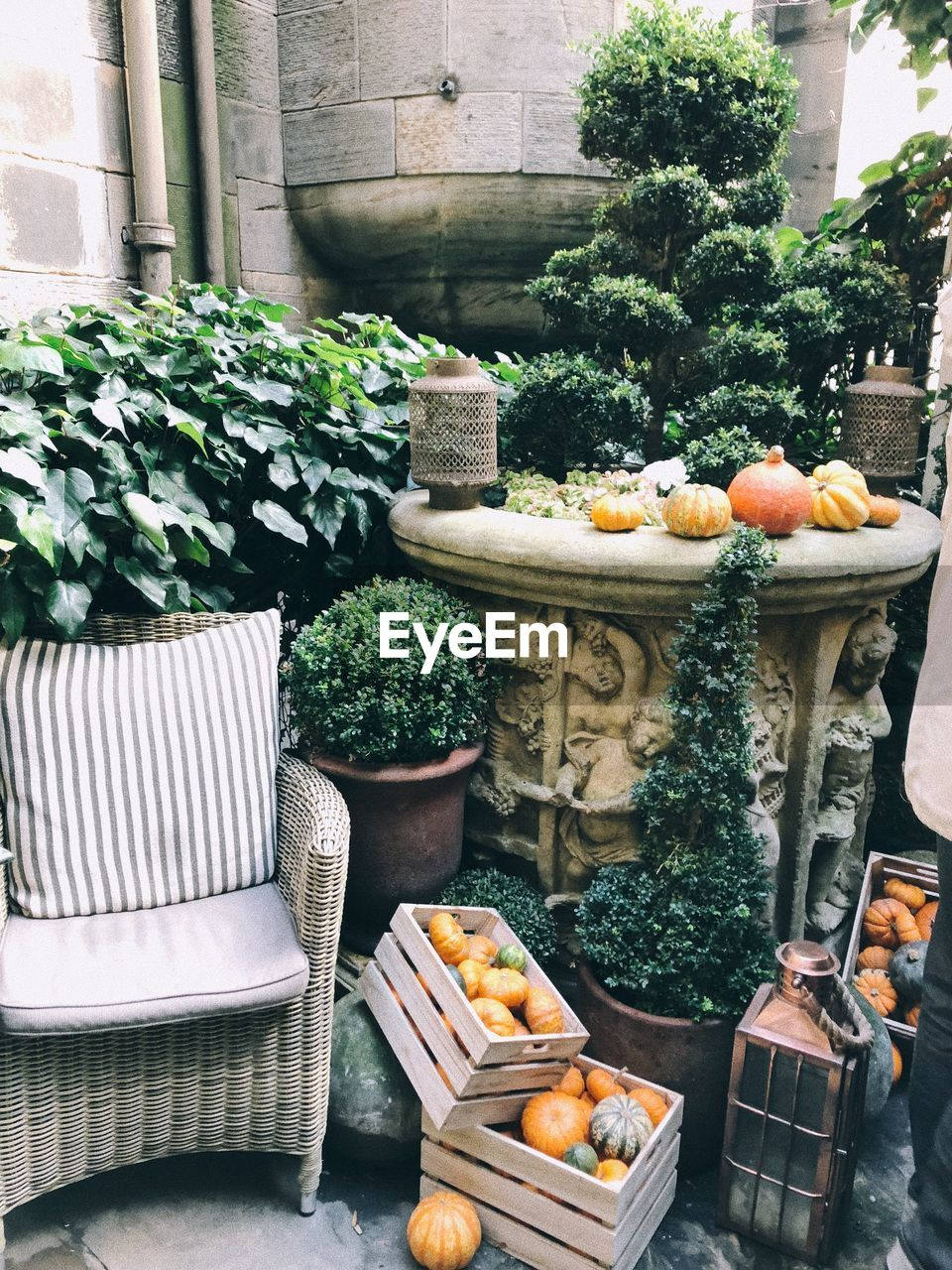High angle view of pumpkins in crates by potted plants