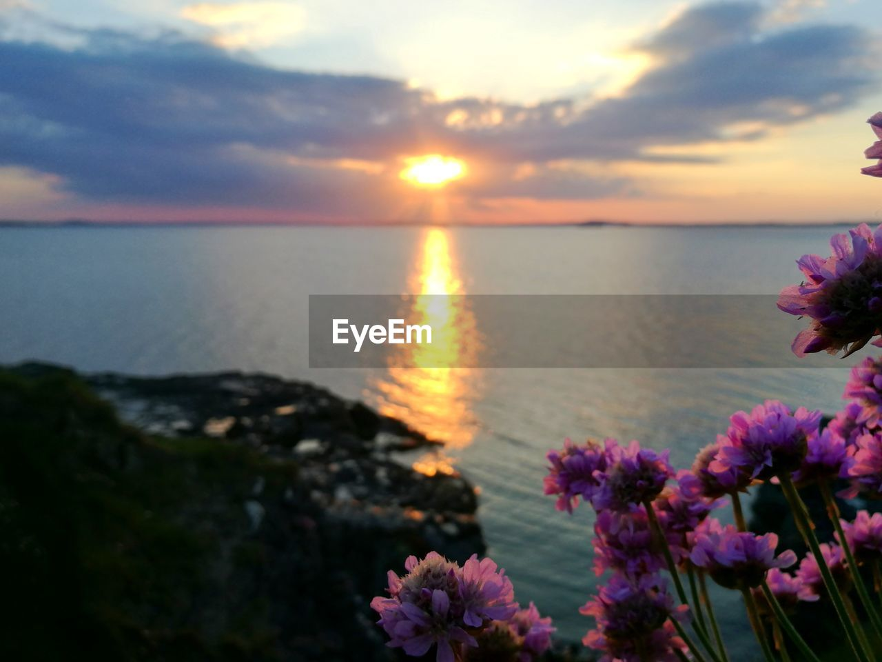 beauty in nature, sunset, nature, sky, sea, scenics, water, flower, tranquility, sun, horizon over water, tranquil scene, cloud - sky, no people, plant, outdoors, sunlight, growth, beach, fragility, close-up, freshness, day