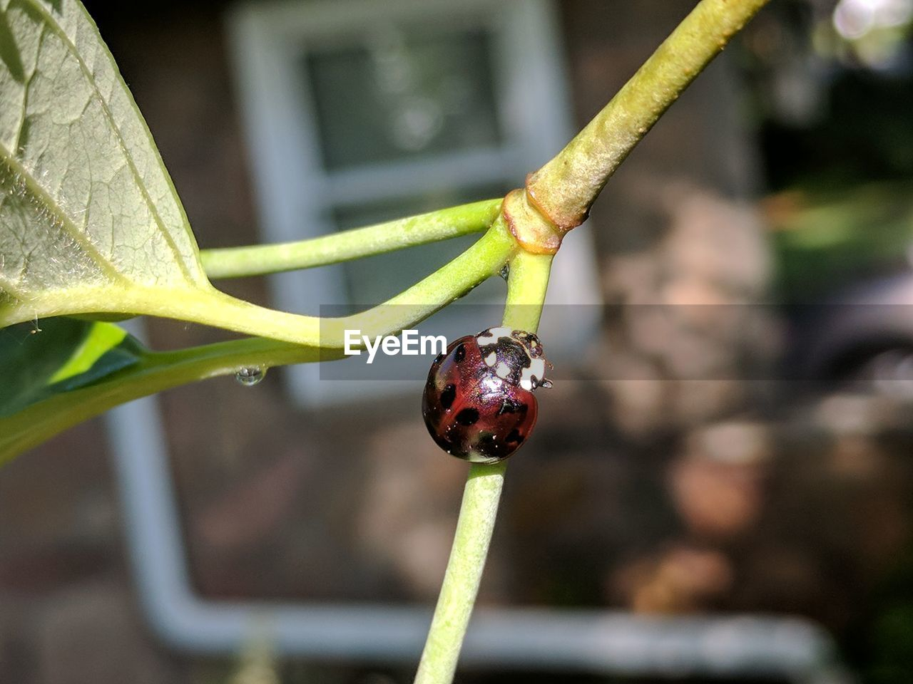 focus on foreground, close-up, no people, plant, day, food and drink, nature, food, invertebrate, insect, freshness, animal, animal themes, growth, animal wildlife, animals in the wild, healthy eating, plant stem, plant part, outdoors