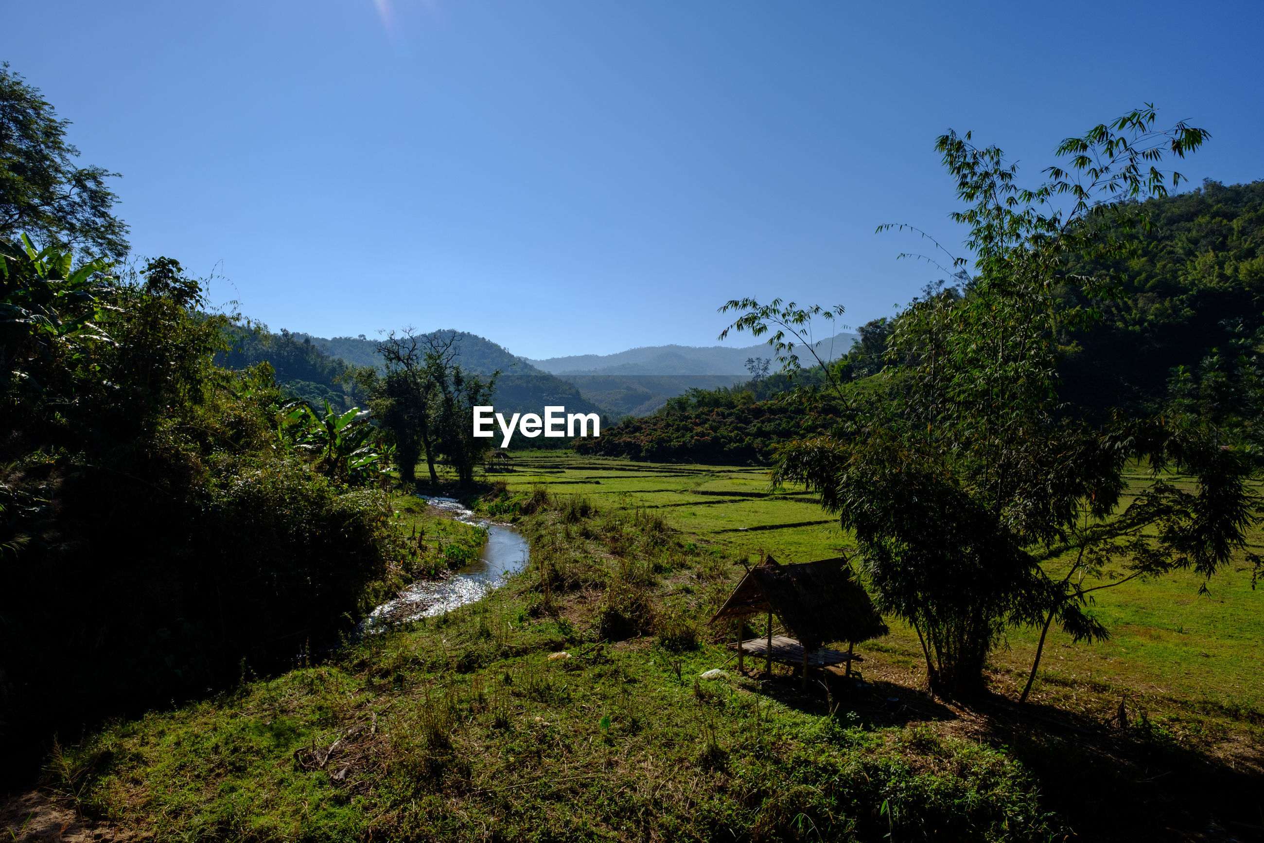 SCENIC VIEW OF GREEN LANDSCAPE AND TREES AGAINST SKY
