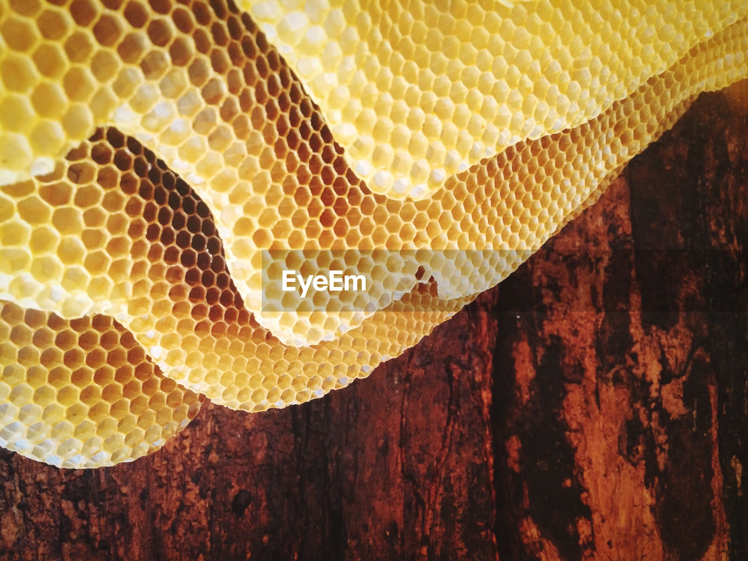 Close-up of honey bee comb