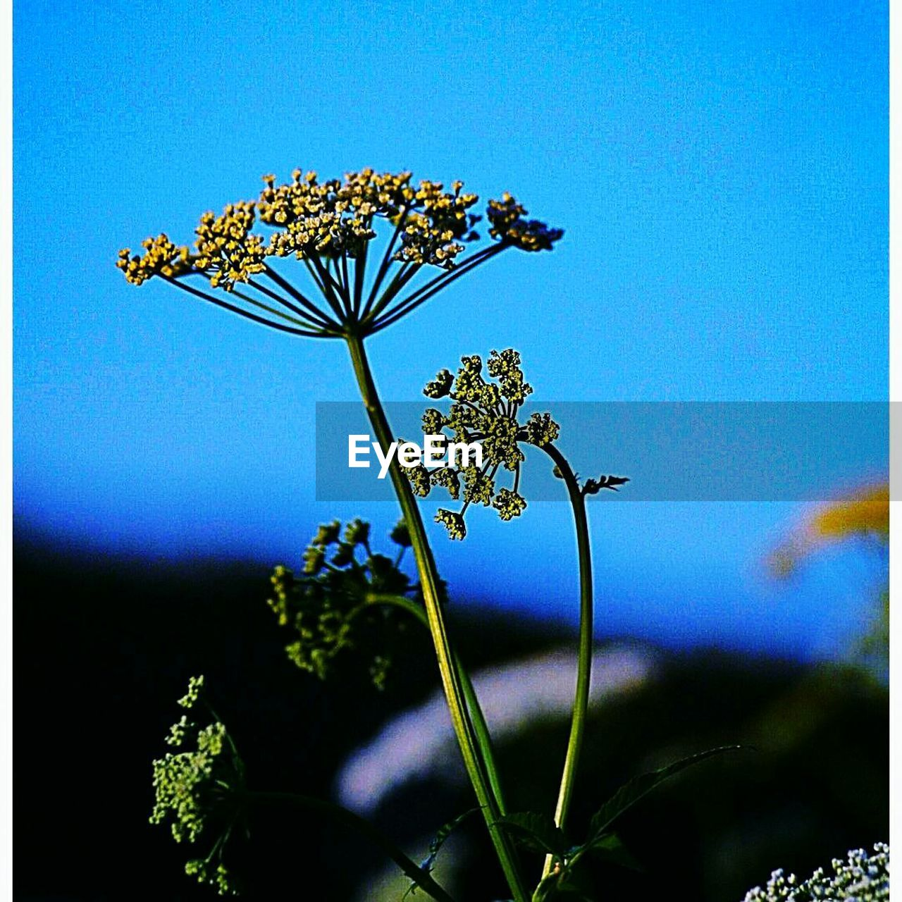 flower, growth, nature, fragility, beauty in nature, plant, no people, petal, blue, day, outdoors, blooming, close-up, freshness, flower head, clear sky, sky, tree