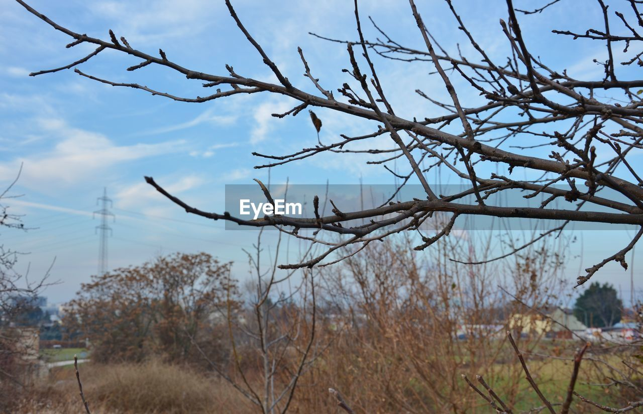 nature, bare tree, no people, tree, branch, day, outdoors, tranquility, beauty in nature, scenics, sky, close-up