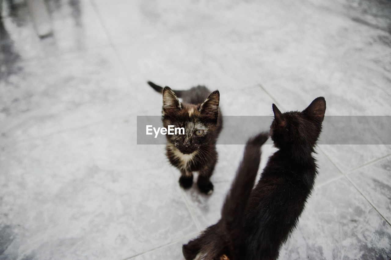 High angle view of cats on floor