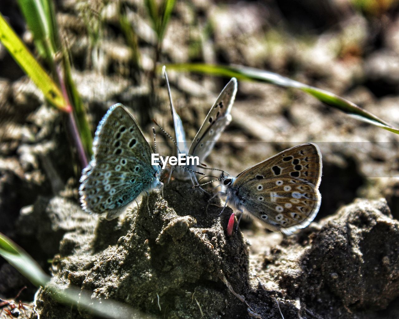animal wildlife, animal, animal themes, animals in the wild, invertebrate, insect, animal wing, butterfly - insect, nature, day, close-up, one animal, no people, focus on foreground, beauty in nature, sunlight, selective focus, butterfly