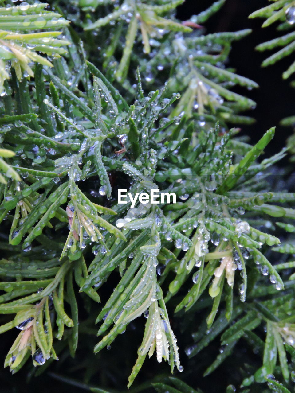 green color, nature, plant, growth, freshness, no people, beauty in nature, drop, close-up, selective focus, cold temperature, winter, day, outdoors, water, leaf, snow, fragility