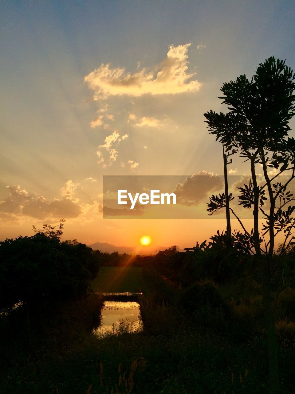 sunset, sky, plant, tree, cloud - sky, beauty in nature, nature, scenics - nature, tranquil scene, growth, tranquility, orange color, no people, silhouette, sun, field, sunlight, architecture, outdoors, built structure