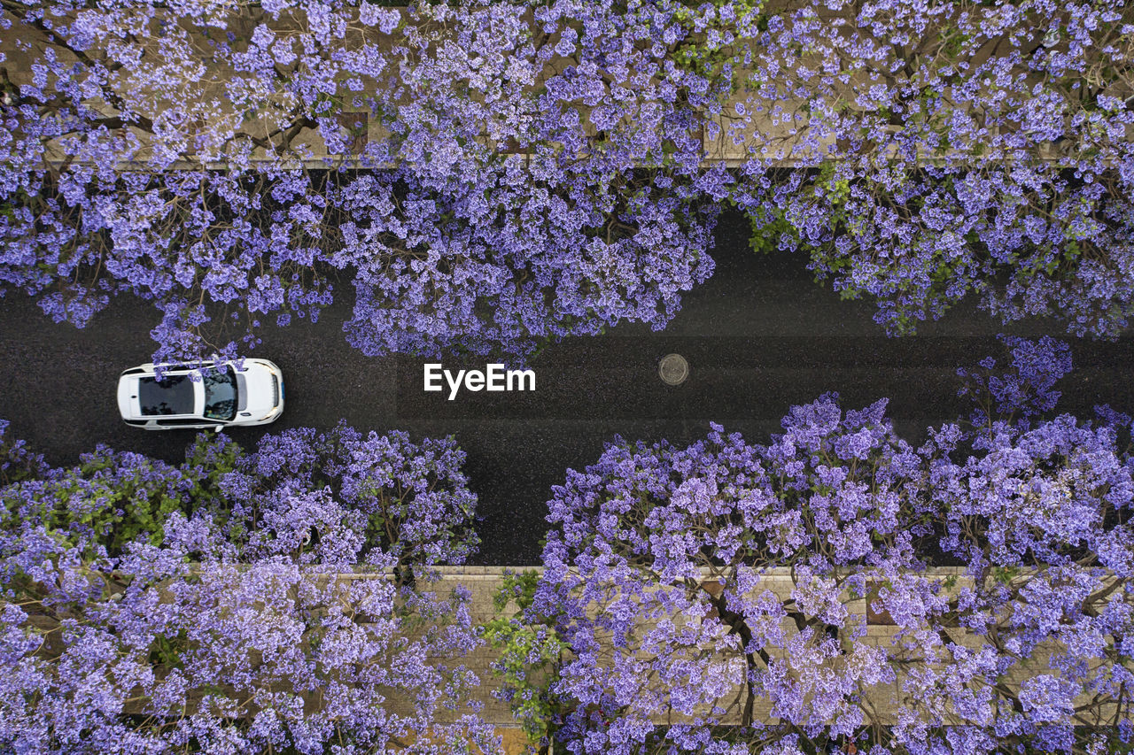 HIGH ANGLE VIEW OF PINK FLOWERING PLANTS ON CHERRY BLOSSOM