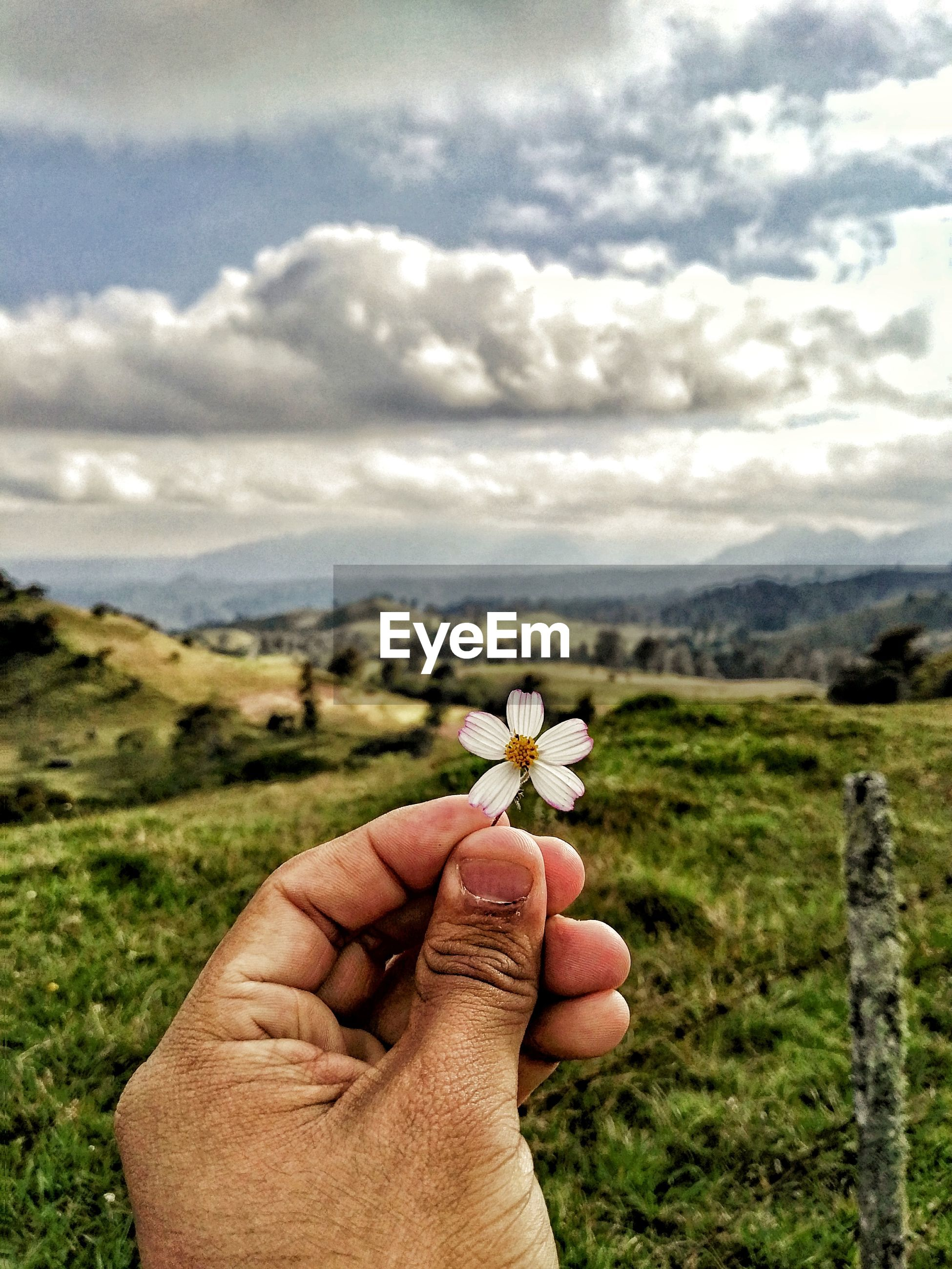 Close-up of hand holding flower on field against cloudy sky