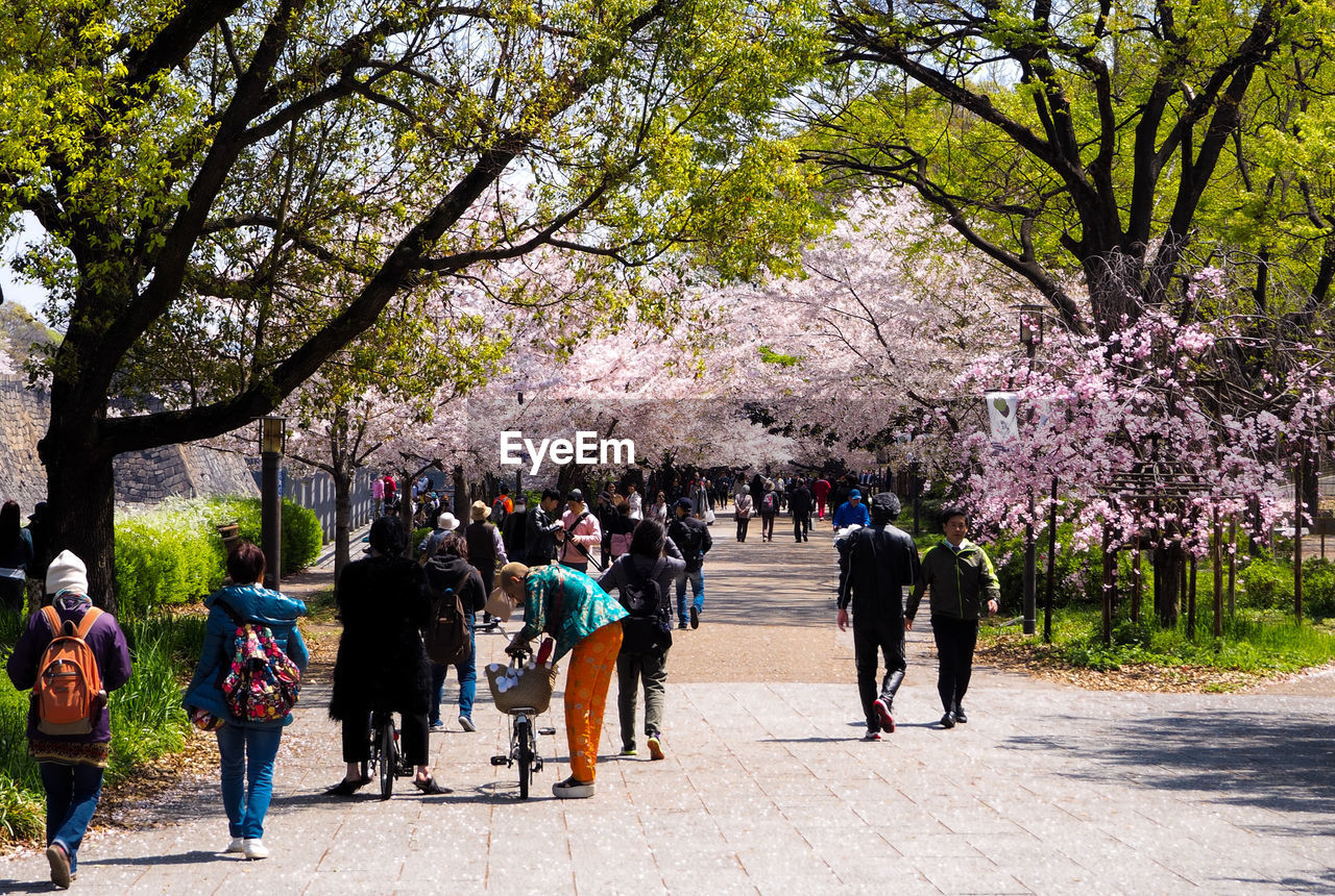 tree, blossom, springtime, flower, walking, large group of people, nature, travel destinations, full length, outdoors, men, leisure activity, branch, beauty in nature, real people, women, day, growth, vacations, people, adult, city, freshness, adults only