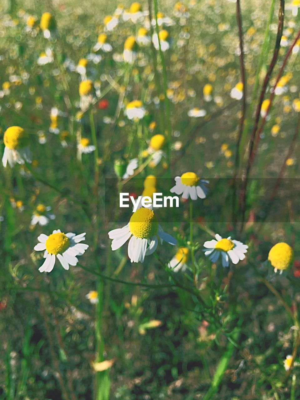 flower, growth, fragility, petal, nature, beauty in nature, yellow, plant, flower head, blooming, freshness, day, no people, outdoors, close-up