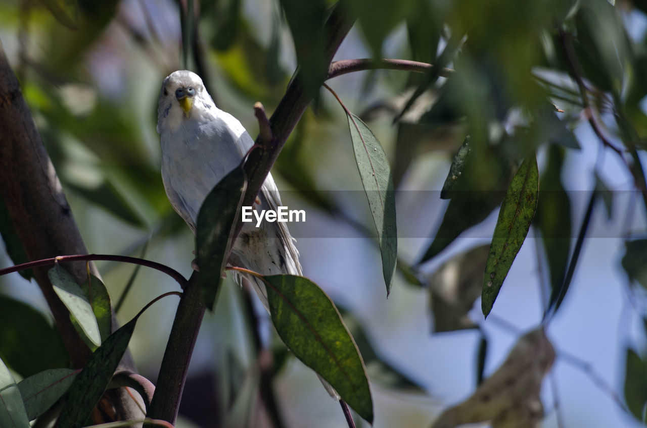 CLOSE-UP OF BIRD PERCHING ON BRANCH OF TREE