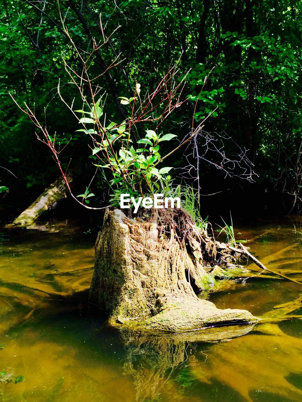 water, nature, no people, tree, tranquility, outdoors, day, lake, animals in the wild, forest, one animal, beauty in nature, animal themes, grass, dead tree, close-up